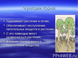 Удерживает растение в почве; Удерживает растение в почве; Обеспечивает поступлен