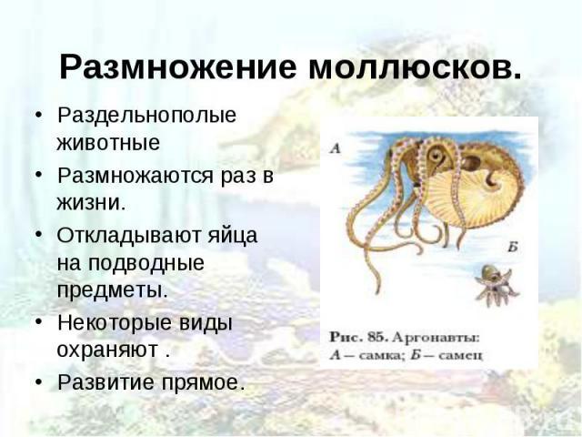 Раздельнополые животные Раздельнополые животные Размножаются раз в жизни. Откладывают яйца на подводные предметы. Некоторые виды охраняют . Развитие прямое.