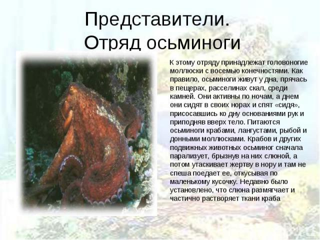 К этому отряду принадлежат головоногие моллюски с восемью конечностями. Как правило, осьминоги живут у дна, прячась в пещерах, расселинах скал, среди камней. Они активны по ночам, а днем они сидят в своих норах и спят «сидя», присосавшись ко дну осн…