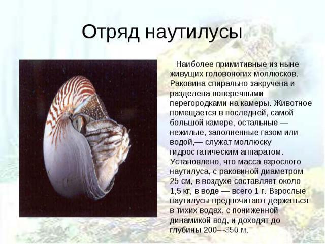 Наиболее примитивные из ныне живущих головоногих моллюсков. Раковина спирально закручена и разделена поперечными перегородками на камеры. Животное помещается в последней, самой большой камере, остальные — нежилые, заполненные газом или водой,— служа…