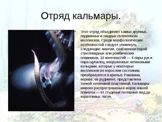 Этот отряд объединяет самых крупных, подвижных и хищных головоногих моллюсков. Среди морфологических особенностей следует упомянуть следующие: мантия, снабженная парой стреловидных или ромбических плавников, 10 конечностей — 4 пары рук и пара щупале…