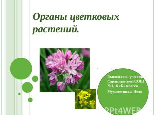 Органы цветковых растений. Выполнила ученица Саракташской СОШ №1, 6 «Б» класса М