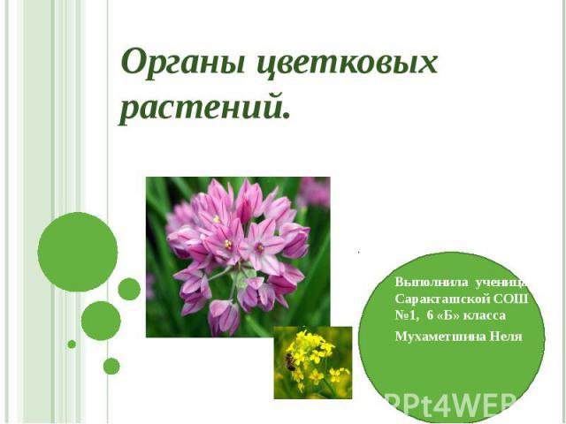 Органы цветковых растений. Выполнила ученица Саракташской СОШ №1, 6 «Б» класса Мухаметшина Неля