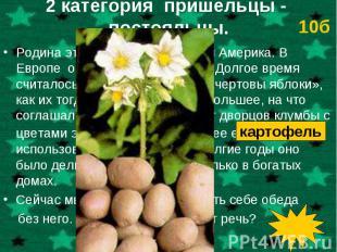 Родина этого растения – Южная Америка. В Европе о нем узнали в 16 веке. Долгое в