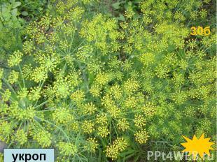 В древности оно считалось одним из лучших декоративных растений. Ветки этого рас