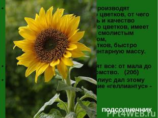 Пчёлы собирают нектар и производят перекрёстное опыление его цветков, от чего ув