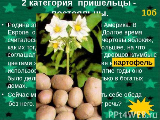 Родина этого растения – Южная Америка. В Европе о нем узнали в 16 веке. Долгое время считалось грехом выращивать «чертовы яблоки», как их тогда окрестили. Самое большее, на что соглашались, - разводить вокруг дворцов клумбы с цветами этого растения …