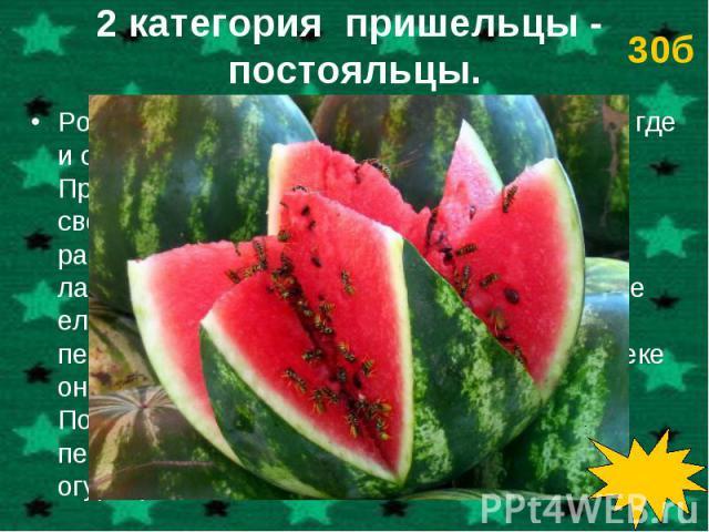 Родина этого растения – пустыня Калахари, где и сейчас оно встречается в диком виде. Прославилось оно тем, что в пустыне поило своим соком всех жаждущих. В Россию это растение было привезено как заморское лакомство. Сырыми плоды этого растения не ел…