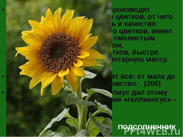Пчёлы собирают нектар и производят перекрёстное опыление его цветков, от чего увеличивается урожайность и качество семян. Мёд, собранный с его цветков, имеет золотистый цвет с терпким смолистым привкусом, слабым ароматом, напоминающим аромат цветков…