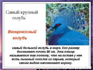 самый большой голубь в мире. Его размер достигает почти 80 см. Эта птица называе