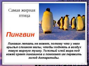 Пингвин летать не может, потому что у него крылья слишком малы, чтобы поднять в