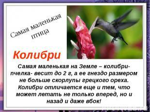 Самая маленькая на Земле – колибри- пчелка- весит до 2 г, а ее гнездо размером н