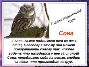 У совы самая подвижная шея из всех птиц. Благодаря этому она может поворачивать
