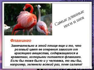 Замечательно в этой птице еще и то, что розовый цвет ее оперения зависит от крас