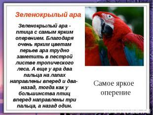 Зеленокрылый ара - птица с самым ярким оперением. Благодаря очень ярким цветам п