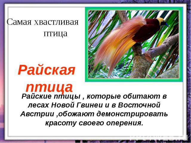 Райские птицы , которые обитают в лесах Новой Гвинеи и в Восточной Австрии ,обожают демонстрировать красоту своего оперения.
