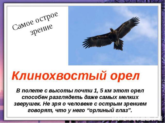 """В полете с высоты почти 1, 5 км этот орел способен разглядеть даже самых мелких зверушек. Не зря о человеке с острым зрением говорят, что у него """"орлиный глаз""""."""