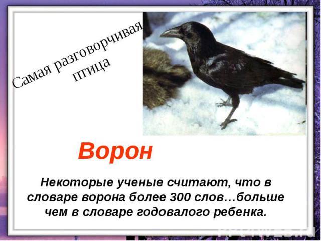 Некоторые ученые считают, что в словаре ворона более 300 слов…больше чем в словаре годовалого ребенка.