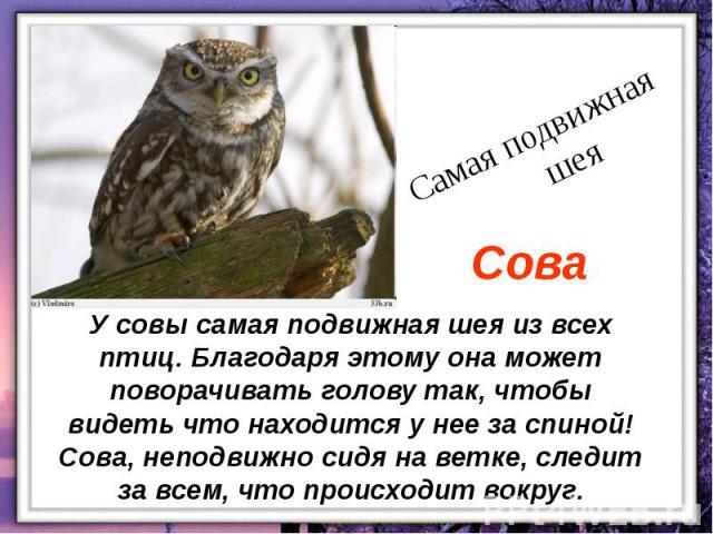 У совы самая подвижная шея из всех птиц. Благодаря этому она может поворачивать голову так, чтобы видеть что находится у нее за спиной! Сова, неподвижно сидя на ветке, следит за всем, что происходит вокруг.