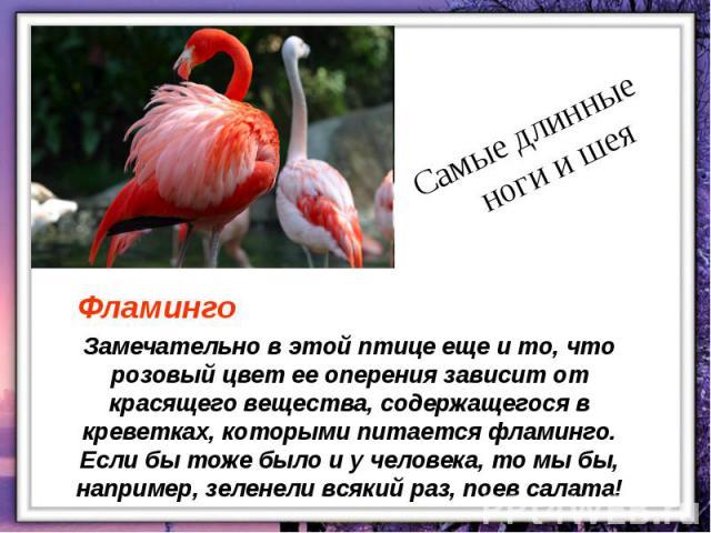 Замечательно в этой птице еще и то, что розовый цвет ее оперения зависит от красящего вещества, содержащегося в креветках, которыми питается фламинго. Если бы тоже было и у человека, то мы бы, например, зеленели всякий раз, поев салата!