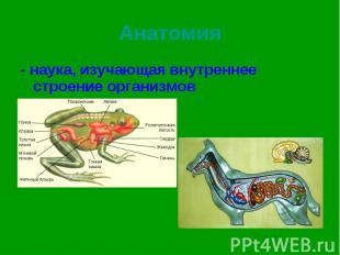 - наука, изучающая внутреннее строение организмов - наука, изучающая внутреннее