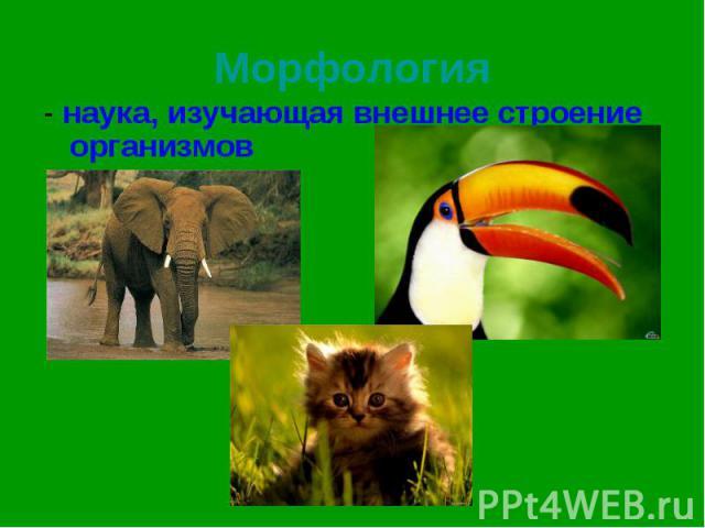 - наука, изучающая внешнее строение организмов - наука, изучающая внешнее строение организмов