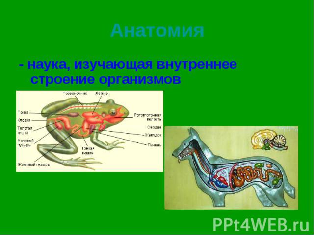 - наука, изучающая внутреннее строение организмов - наука, изучающая внутреннее строение организмов