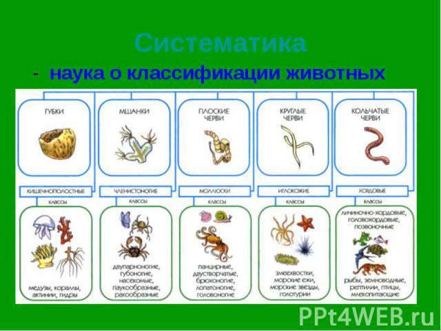 - наука о классификации животных - наука о классификации животных