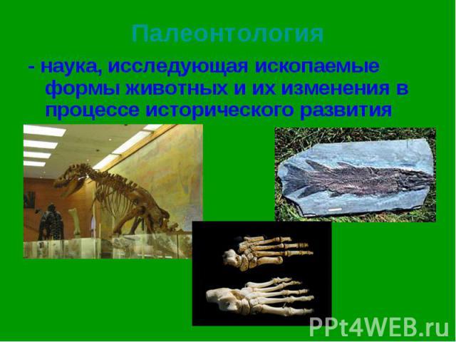 - наука, исследующая ископаемые формы животных и их изменения в процессе исторического развития - наука, исследующая ископаемые формы животных и их изменения в процессе исторического развития