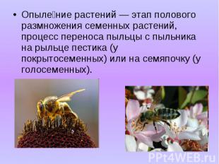 Опыле ние растений — этап полового размножения семенных растений, процесс перено