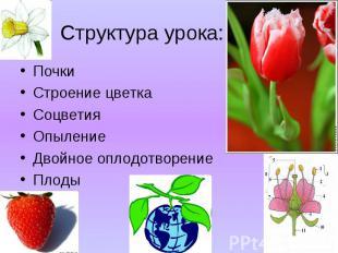 Почки Почки Строение цветка Соцветия Опыление Двойное оплодотворение Плоды
