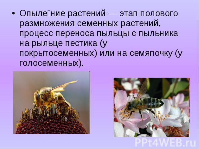 Опыле ние растений — этап полового размножения семенных растений, процесс переноса пыльцы с пыльника на рыльце пестика (у покрытосеменных) или на семяпочку (у голосеменных). Опыле ние растений — этап полового размножения семенных растений, процесс п…