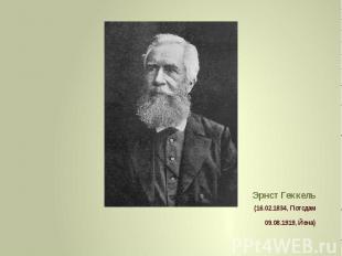 Эрнст Геккель (16.02.1834, Потсдам 09.08.1919, Йена)