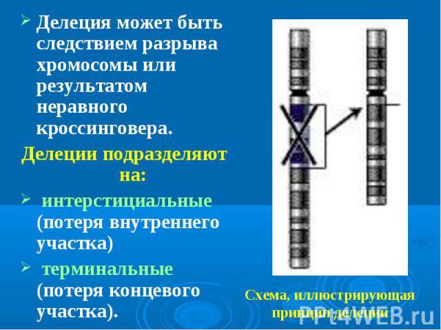 Делеция может быть следствием разрыва хромосомы или результатом неравного кроссинговера. Делеция может быть следствием разрыва хромосомы или результатом неравного кроссинговера. Делеции подразделяют на: интерстициальные (потеря внутреннего участка) …