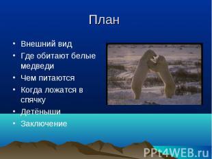 Внешний вид Внешний вид Где обитают белые медведи Чем питаются Когда ложатся в с