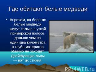 Впрочем, на берегах белые медведи живут только в узкой приморской полосе, дальше