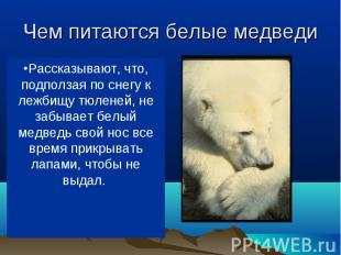 В море ловит белый медведь рыбу, на льдинах (да и в воде тоже) — тюленей, на бер