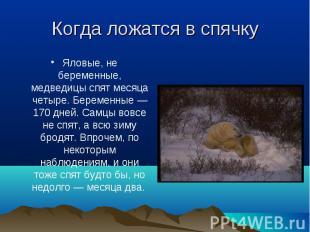 Яловые, не беременные, медведицы спят месяца четыре. Беременные — 170 дней. Самц