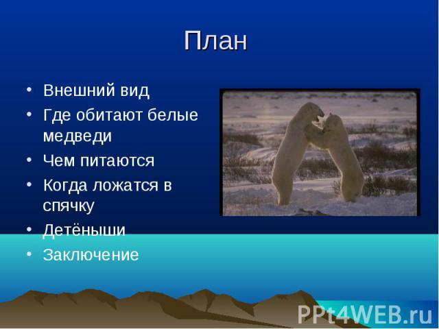 Внешний вид Внешний вид Где обитают белые медведи Чем питаются Когда ложатся в спячку Детёныши Заключение