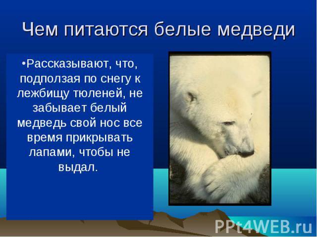 В море ловит белый медведь рыбу, на льдинах (да и в воде тоже) — тюленей, на берегу — песцов, пеструшек, северных оленей. Когда голоден, ест и падаль, водоросли, мхи. В море ловит белый медведь рыбу, на льдинах (да и в воде тоже) — тюленей, на берег…
