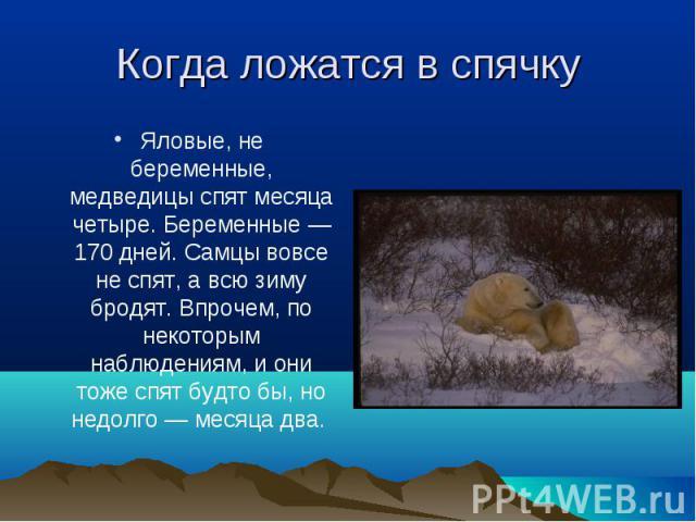 Яловые, не беременные, медведицы спят месяца четыре. Беременные — 170 дней. Самцы вовсе не спят, а всю зиму бродят. Впрочем, по некоторым наблюдениям, и они тоже спят будто бы, но недолго — месяца два. Яловые, не беременные, медведицы спят месяца че…