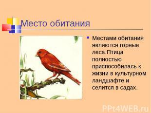 Местами обитания являются горные леса.Птица полностью приспособилась к жизни в к
