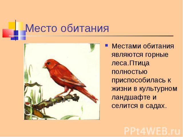 Местами обитания являются горные леса.Птица полностью приспособилась к жизни в культурном ландшафте и селится в садах. Местами обитания являются горные леса.Птица полностью приспособилась к жизни в культурном ландшафте и селится в садах.