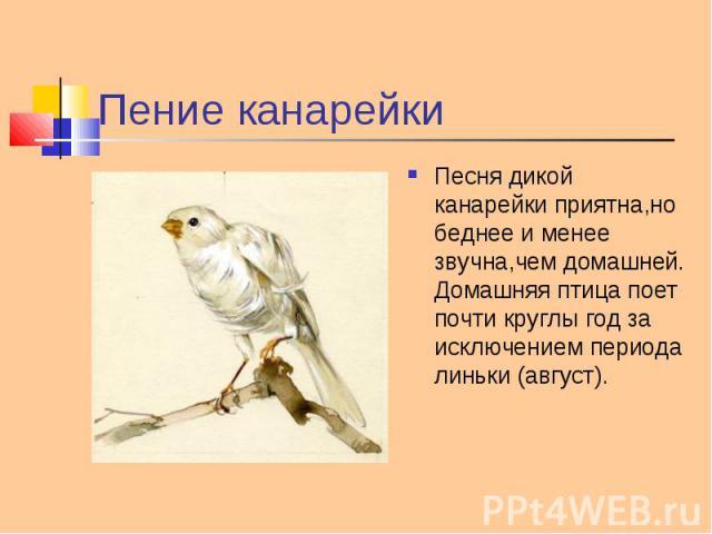 Песня дикой канарейки приятна,но беднее и менее звучна,чем домашней. Домашняя птица поет почти круглы год за исключением периода линьки (август). Песня дикой канарейки приятна,но беднее и менее звучна,чем домашней. Домашняя птица поет почти круглы г…