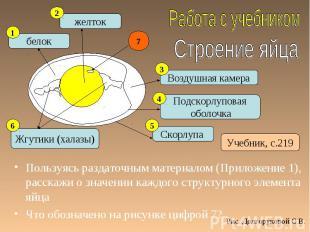 Пользуясь раздаточным материалом (Приложение 1), расскажи о значении каждого стр