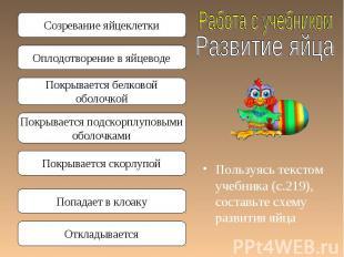 Пользуясь текстом учебника (с.219), составьте схему развития яйца Пользуясь текс
