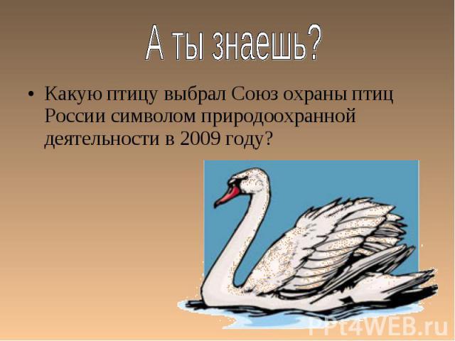 Какую птицу выбрал Союз охраны птиц России символом природоохранной деятельности в 2009 году? Какую птицу выбрал Союз охраны птиц России символом природоохранной деятельности в 2009 году?