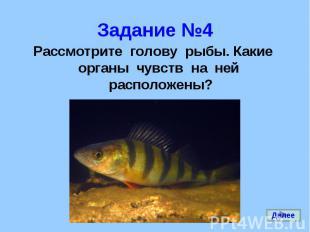 Рассмотрите голову рыбы. Какие органы чувств на ней расположены? Рассмотрите гол