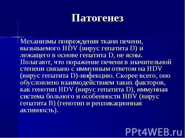 Механизмы повреждения ткани печени, вызываемого HDV (вирус гепатита D) и лежащего в основе гепатита D, не ясны. Полагают, что поражение печени в значительной степени связано с иммунным ответом на HDV (вирус гепатита D)-инфекцию. Скорее всего, оно об…