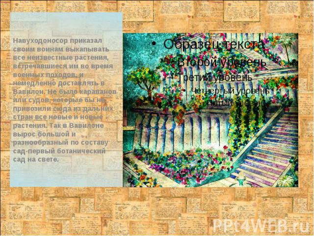 Навуходоносор приказал своим воинам выкапывать все неизвестные растения, встречавшиеся им во время военных походов, и немедленно доставлять в Вавилон. Не было караванов или судов, которые бы не привозили сюда из дальних стран все новые и новые расте…